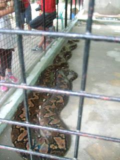 Photo of Prony the Python